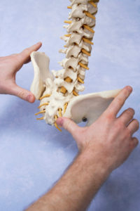 Close-up of a anatomy model of a human spine and pelvis choose chiropractic